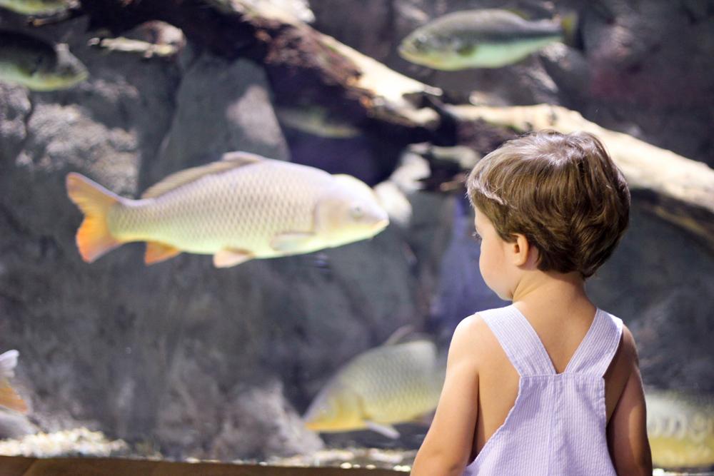acuario de sevilla con niños