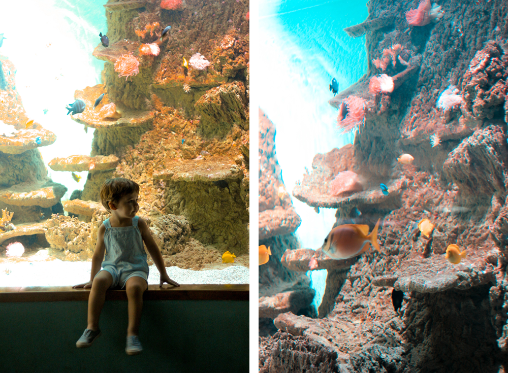 visitar el acuario de sevilla con niños